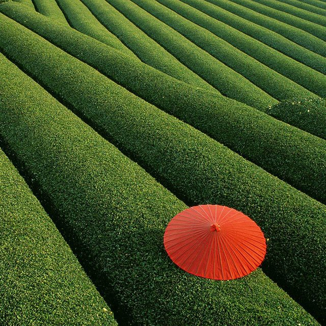 Fields-of-Tea-China